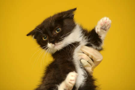 funny black and white kitten photo