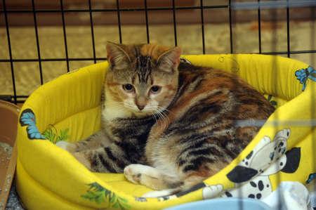 gato en una jaula
