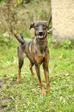 Half-breed puppy Stock Photo - 16194405