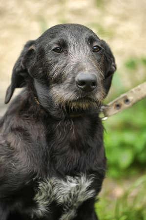 Black mongrel dog Stock Photo - 16216670