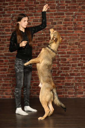 teen girl playing with a dog Stock Photo - 16221383