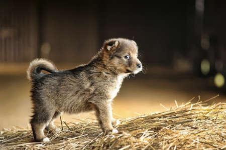 干し草に座ってかわいい子犬