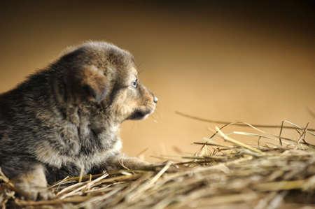 pupy: Cute puppy sitting in hay