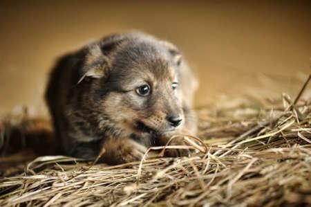 Cute puppy sitting in hay