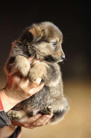 Little sweet puppy