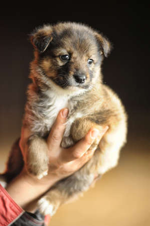pupy: Little sweet puppy