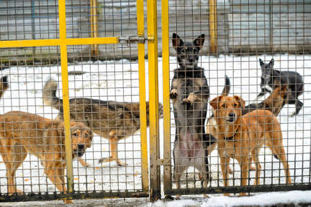 Homeless dogs shelter photo