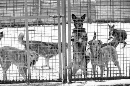 Homeless dogs shelter Stock Photo - 16194260
