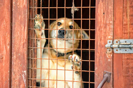 dog kennel: Homeless dogs shelter