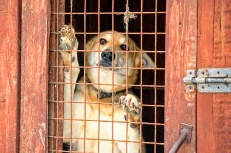 perro triste: Perros sin hogar refugio Foto de archivo