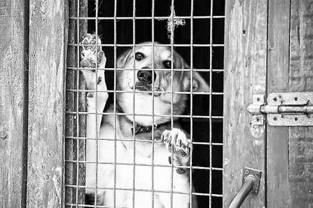 Homeless dogs shelter Stock Photo - 16194256