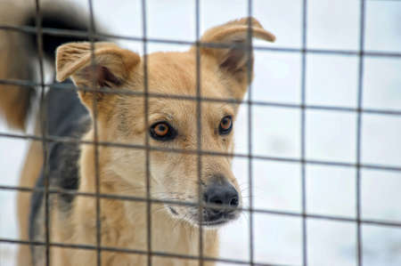 lurcher: Homeless dogs shelter