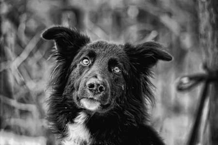 Black and white dog photo