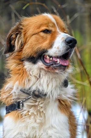 Watchdog Stock Photo - 16194171