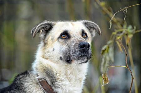 lindo perro mestizo Foto de archivo