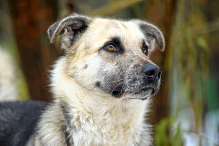rotweiler: cute dog mongrel