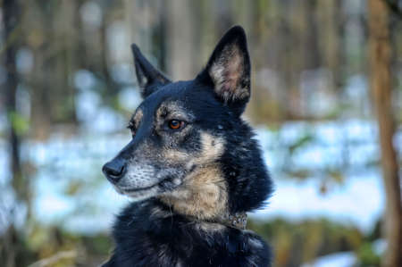 Mixed-breed dog photo