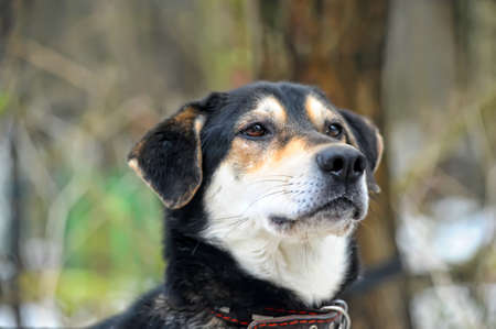 Cute Dog Stock Photo - 16195205