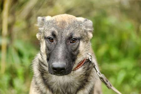 tortured: mongrel puppy Stock Photo