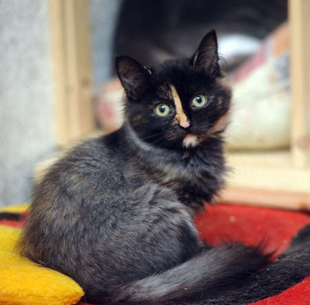 colden: black with a red kitten Stock Photo