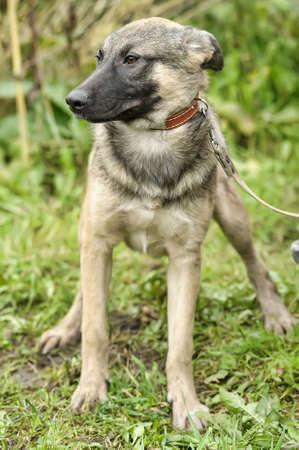 Half-breed hound dog Stock Photo - 16444460