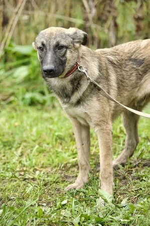 half breed: Half-breed hound dog