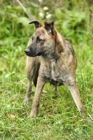 Half-breed hound dog Stock Photo - 16444467
