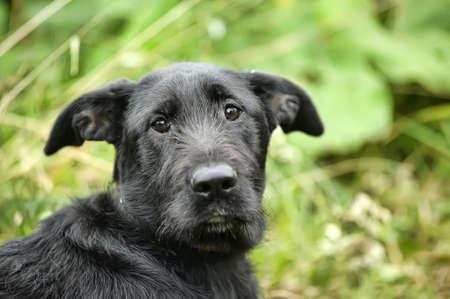 black mongrel dog Stock Photo - 16889435