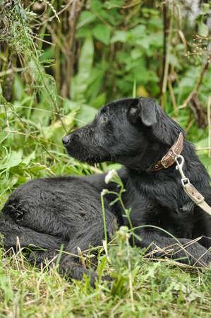 black mongrel dog Stock Photo - 16889439