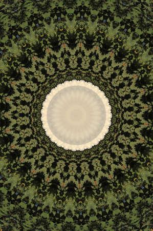 green circular pattern photo
