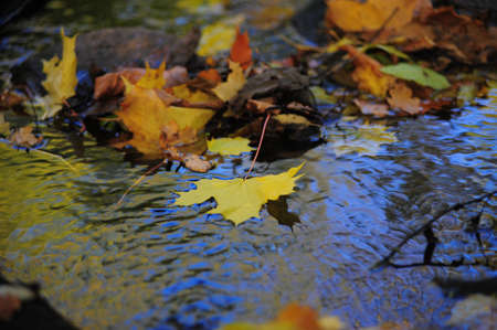 Autumn background with maple leaves and water photo