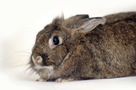 Gray rabbit sitting on white background Stock Photo - 16813504