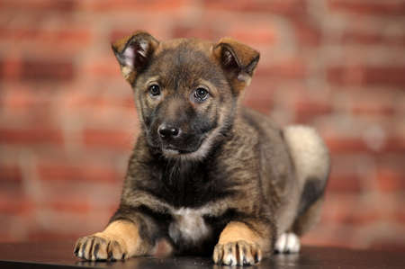 puppy Stock Photo - 16857433