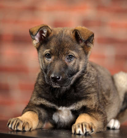 puppy  Stock Photo - 16857431