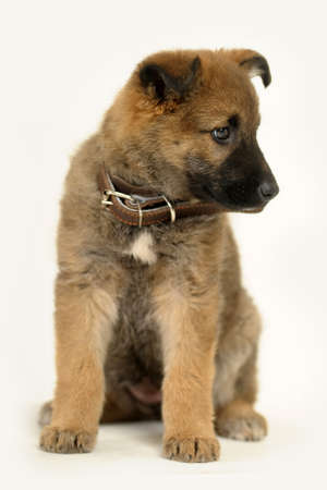 puppy Stock Photo - 16858070