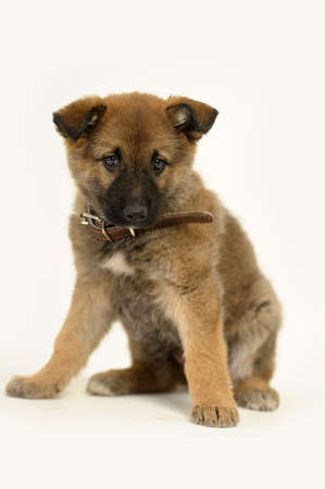 puppy  Stock Photo - 16858075