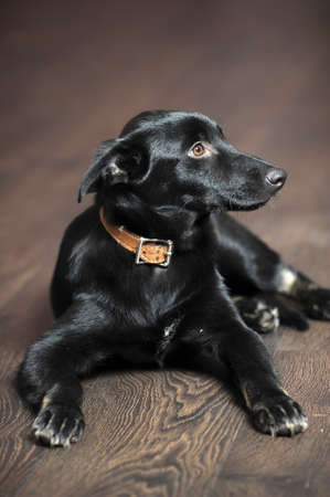 Black puppy Stock Photo - 16813540