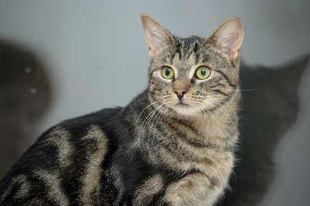 Mackerel Tabby Cat  Stock Photo - 16856107