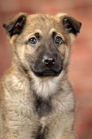 puppy Stock Photo - 16855938