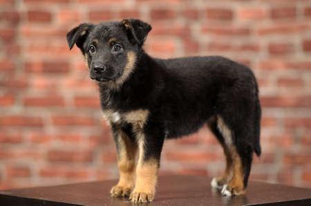 puppy Stock Photo - 16855956