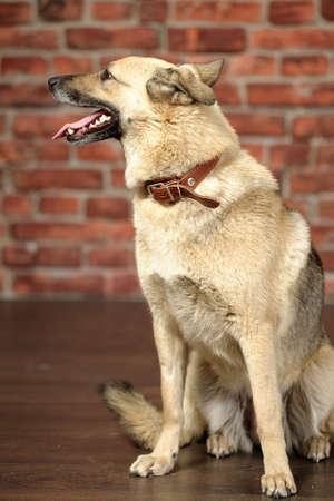 rotweiler: Cute Dog