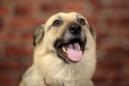 dog mongrel Stock Photo - 17167372