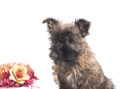 Terrier cachorro y flores photo