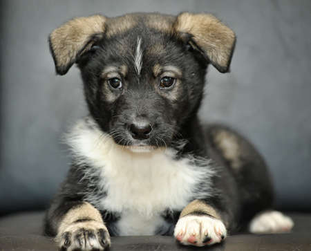 funny Puppy photo