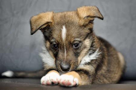 funny Puppy Zdjęcie Seryjne