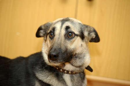 Cute Dog  Stock Photo - 17458233