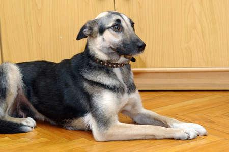 Cute Dog Stock Photo - 17167390