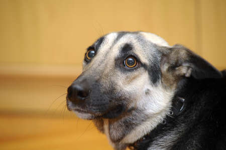 perro asustado: Lindo perro