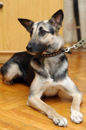 Cute Dog Stock Photo - 17167394