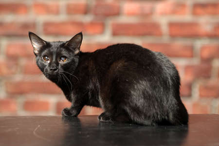 Black Cat with sick eyes photo